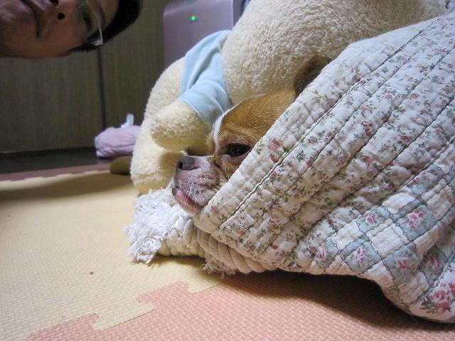 f:id:yasukazu01:20100908231813j:image