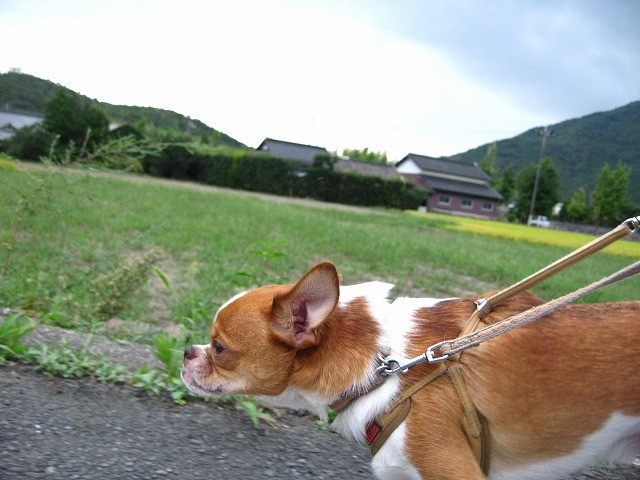 f:id:yasukazu01:20100912210043j:image
