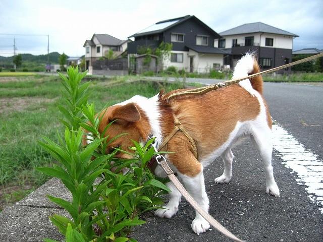 f:id:yasukazu01:20100912210339j:image