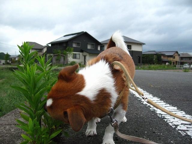 f:id:yasukazu01:20100912210420j:image