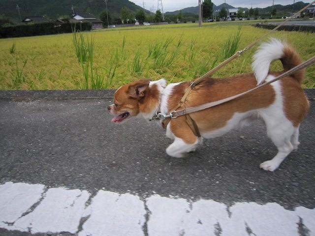 f:id:yasukazu01:20100912211056j:image