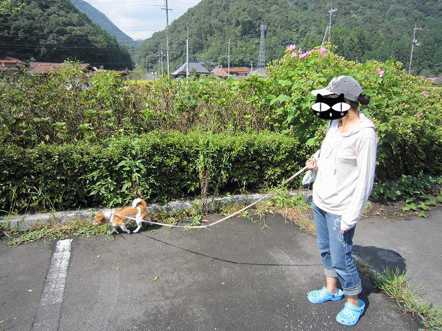 f:id:yasukazu01:20100920203545j:image