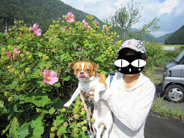 f:id:yasukazu01:20100920203641j:image