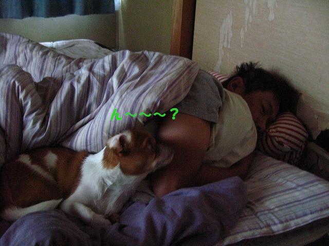 f:id:yasukazu01:20100926203757j:image