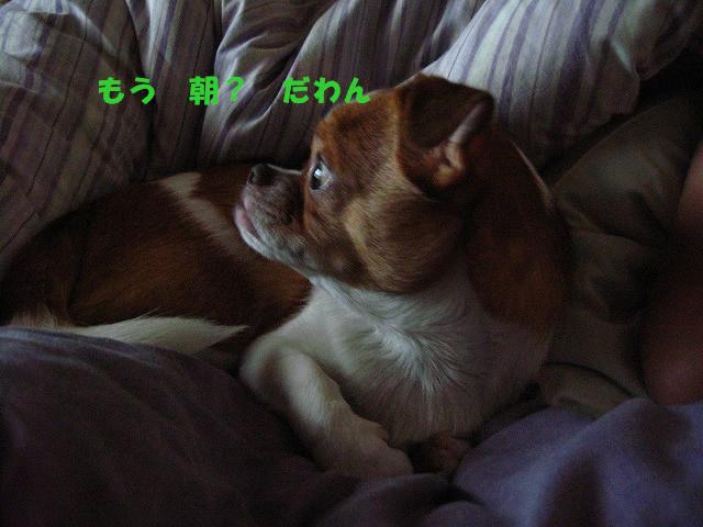 f:id:yasukazu01:20100926203758j:image