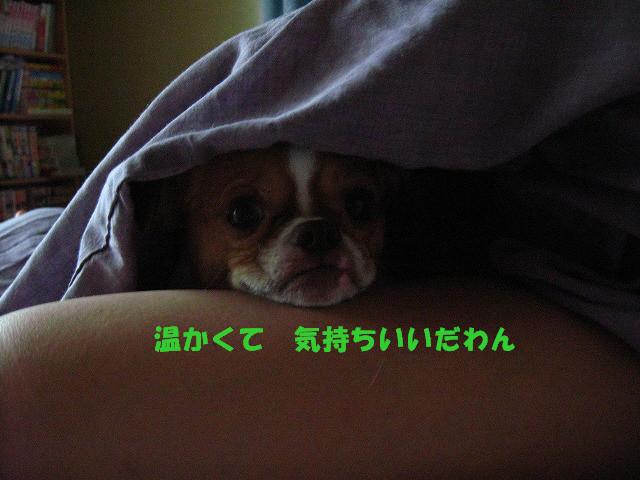 f:id:yasukazu01:20100926204038j:image