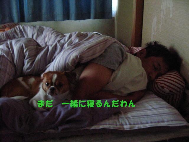 f:id:yasukazu01:20100926204039j:image
