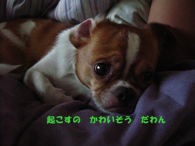 f:id:yasukazu01:20100926204040j:image