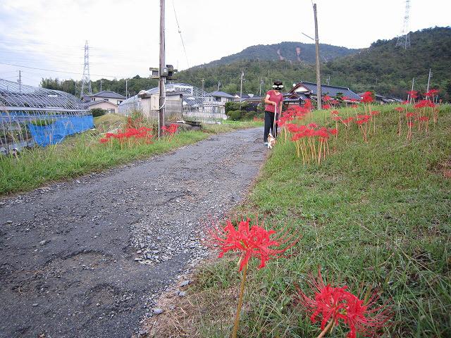 f:id:yasukazu01:20101003204731j:image