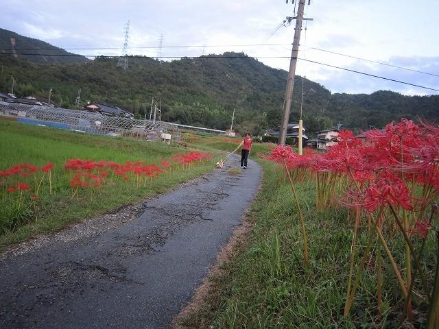 f:id:yasukazu01:20101003204733j:image