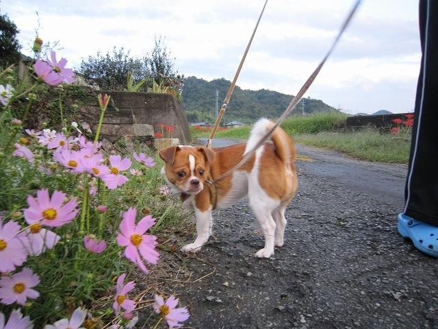 f:id:yasukazu01:20101003205732j:image