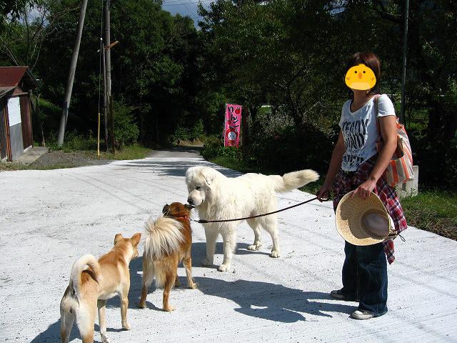 f:id:yasukazu01:20101006203413j:image