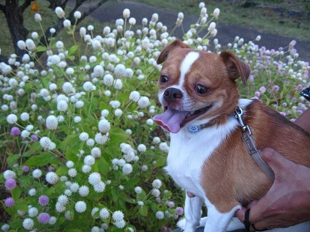 f:id:yasukazu01:20101012214329j:image