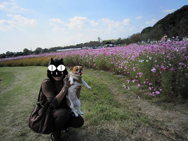 f:id:yasukazu01:20101020215814j:image