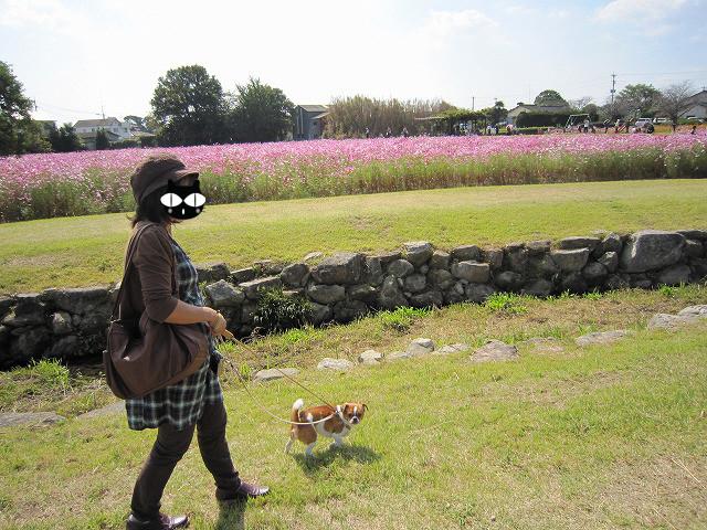 f:id:yasukazu01:20101020220530j:image