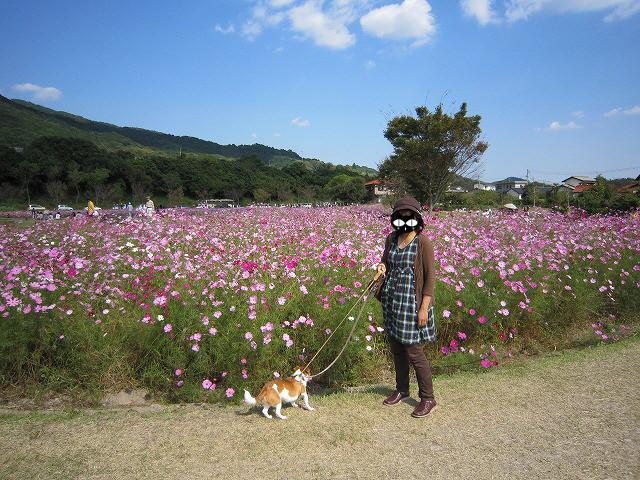 f:id:yasukazu01:20101020220824j:image