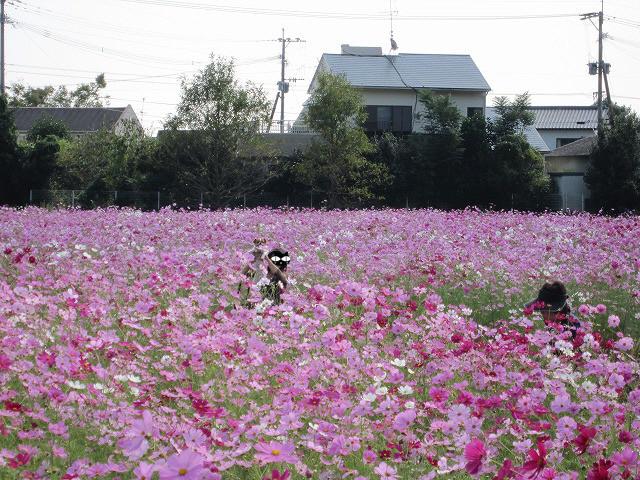 f:id:yasukazu01:20101020221207j:image