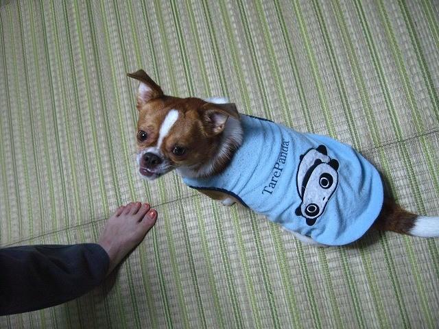f:id:yasukazu01:20101021230217j:image