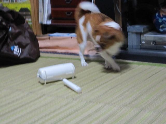 f:id:yasukazu01:20101028222355j:image