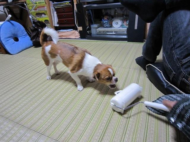 f:id:yasukazu01:20101028222551j:image