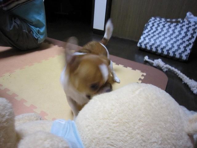 f:id:yasukazu01:20101104220311j:image