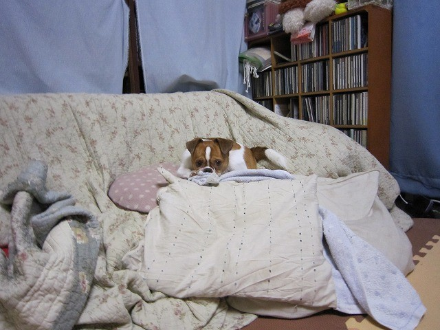 f:id:yasukazu01:20101109220327j:image