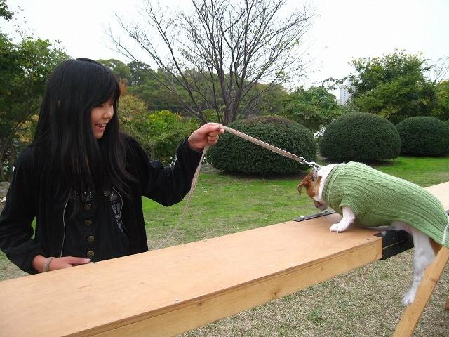 f:id:yasukazu01:20101114225121j:image