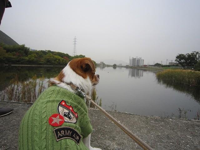 f:id:yasukazu01:20101116203959j:image