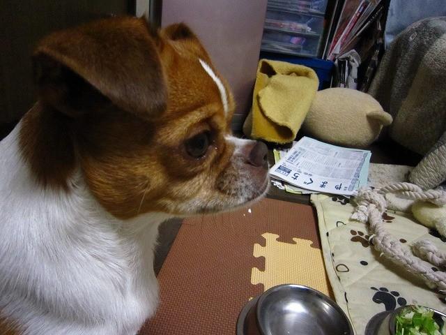 f:id:yasukazu01:20101119204041j:image