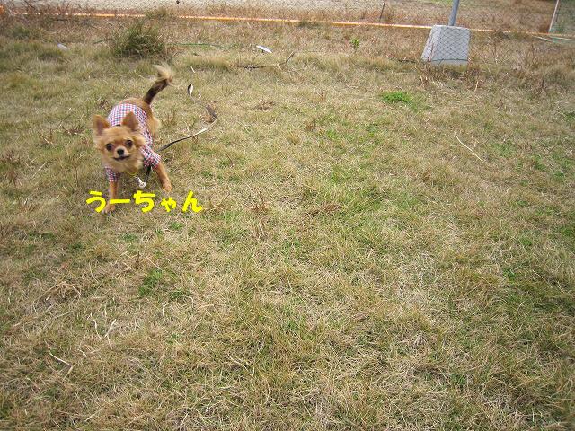 f:id:yasukazu01:20101128214711j:image