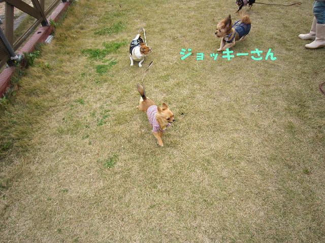 f:id:yasukazu01:20101128215731j:image