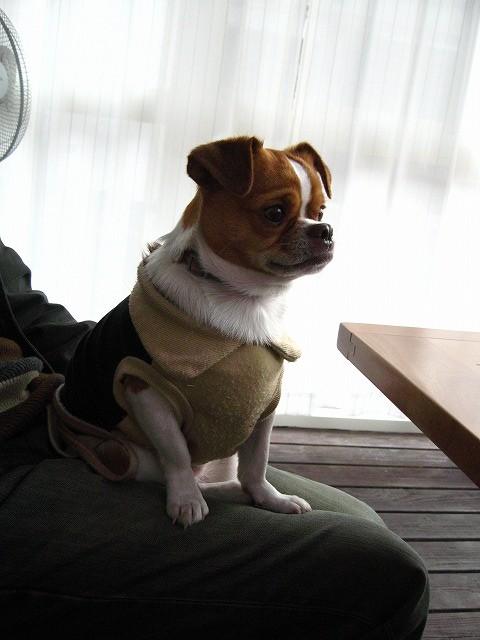 f:id:yasukazu01:20101129224155j:image