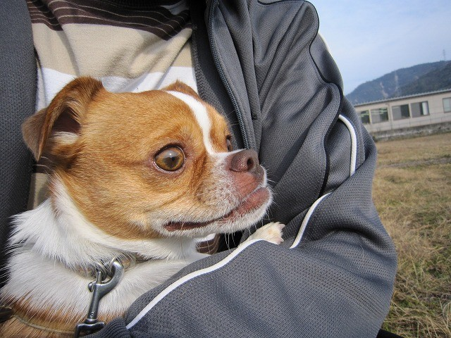 f:id:yasukazu01:20101202205847j:image