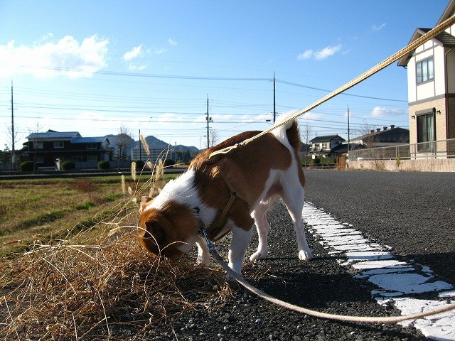 f:id:yasukazu01:20101210220720j:image