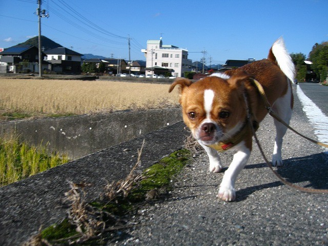 f:id:yasukazu01:20101210220722j:image