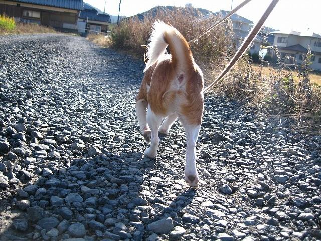 f:id:yasukazu01:20101210220725j:image