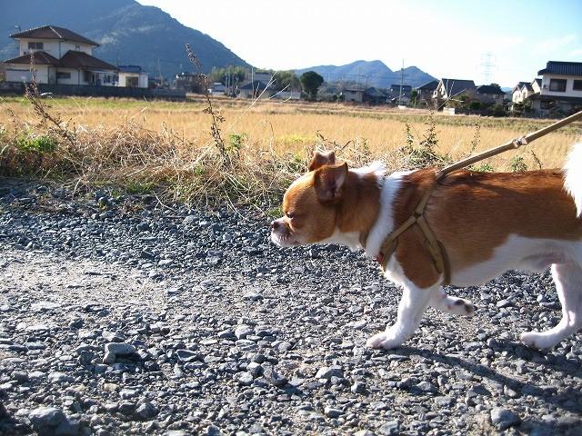 f:id:yasukazu01:20101210220726j:image
