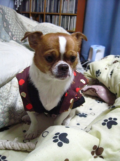 f:id:yasukazu01:20101216210907j:image