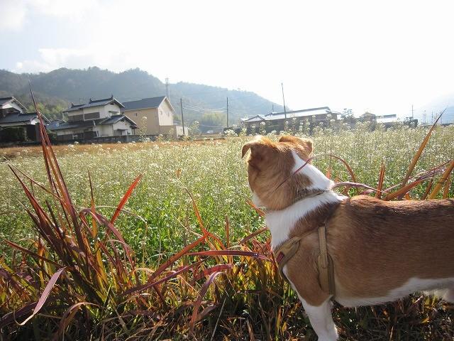 f:id:yasukazu01:20101223225825j:image
