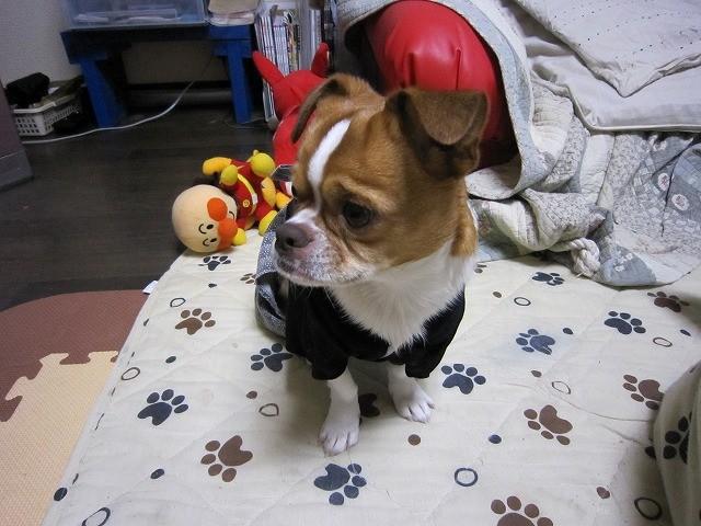 f:id:yasukazu01:20110101220622j:image