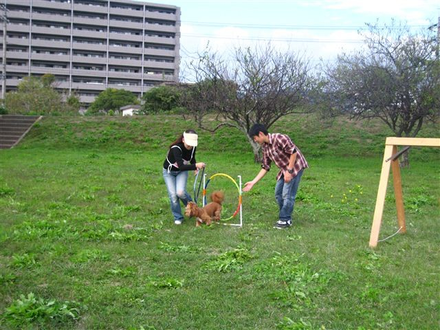 f:id:yasukazu01:20110101234343j:image