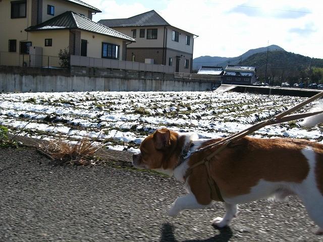 f:id:yasukazu01:20110102220747j:image