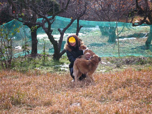 f:id:yasukazu01:20110102222017j:image
