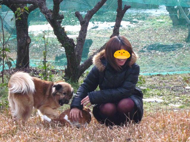 f:id:yasukazu01:20110102222018j:image
