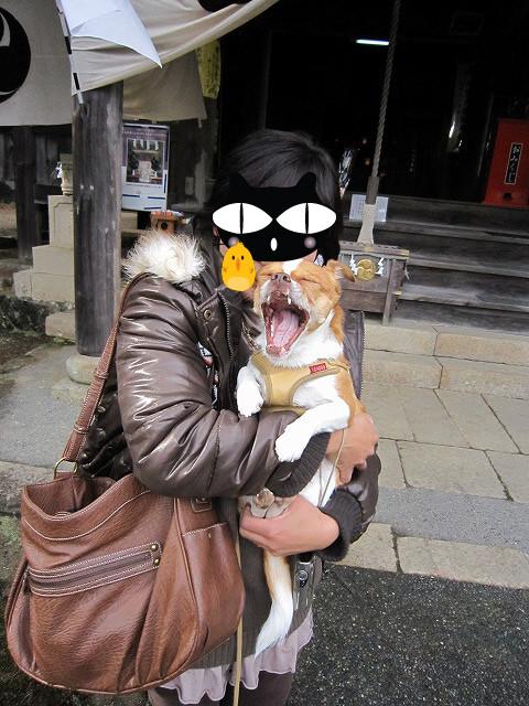 f:id:yasukazu01:20110104230813j:image