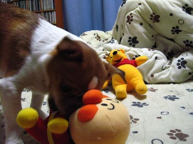 f:id:yasukazu01:20110105230523j:image