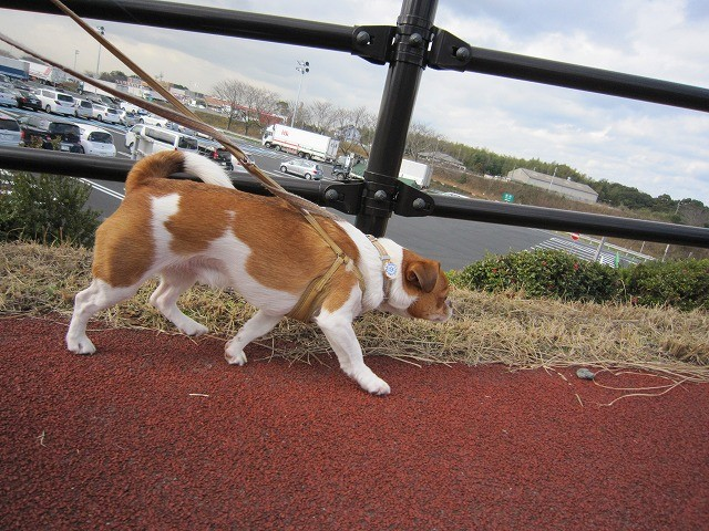 f:id:yasukazu01:20110109205804j:image