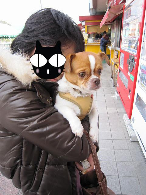 f:id:yasukazu01:20110110222819j:image