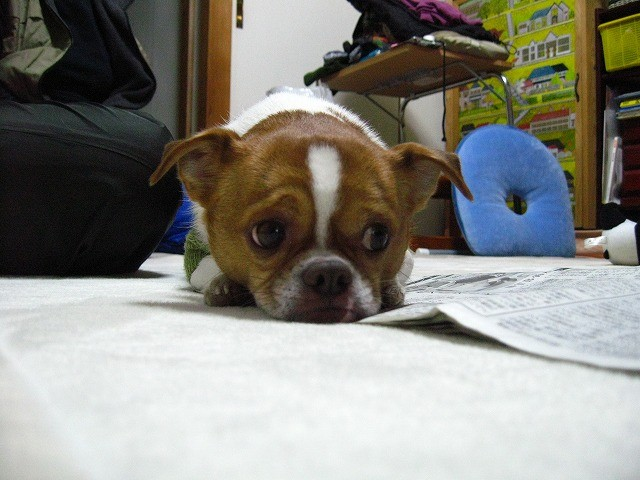f:id:yasukazu01:20110111223846j:image