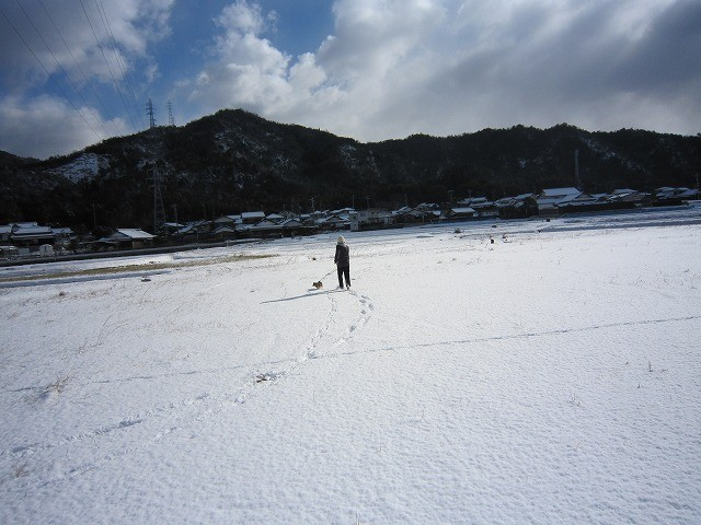 f:id:yasukazu01:20110116203825j:image